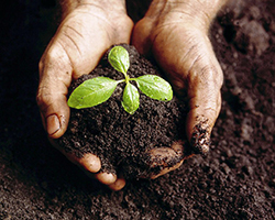 Save the soil